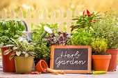 stock photo of shovel  - Herb garden at home yard in with pots of herbs in front of fence - JPG