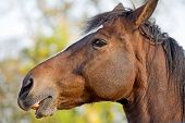 image of brown horse  - A Close - JPG