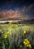 picture of blacktail  - Sunflowers at dawn at Blacktail Ponds Overlook in Grand Teton National park WY - JPG