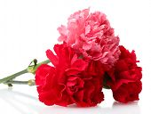 stock photo of carnations  - Bouquet of carnations isolated on white - JPG