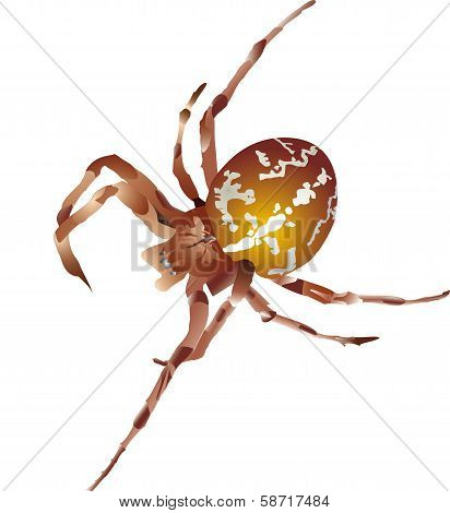 Vector illustration. Brown spider
