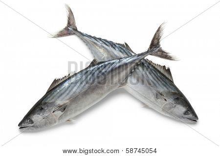 Fresh bonito fishes at white background