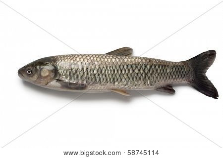 Whole single grass carp on white background