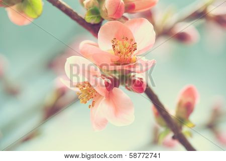 Gentle spring blossom