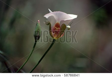 Pink And White Flower