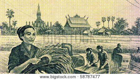 LAOS - CIRCA 1979: Grain Harvesting on 100 Kip 1979 Banknote from Laos.