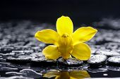 stock photo of yellow orchid  - still life with pebbles and yellow orchid - JPG