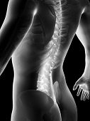 image of lumbar spine  - 3d rendered anatomy illustration of painful back - JPG