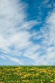 stock photo of wildflowers  - Wildflower meadow and blue sky as a background - JPG