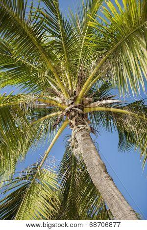 Palm tree against clear sky; Koh Pha Ngan; Thailand