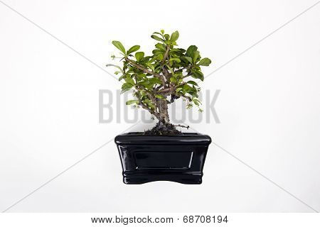 Potted plant over white background