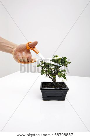 Man's hand cutting leaves of potted plant on table against gray background
