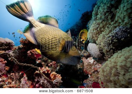 Titan Triggerfish, Ocean And Sun