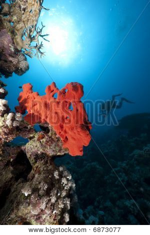 Ocean, Coral And Diver