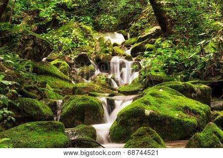 small creek in a mossy forest