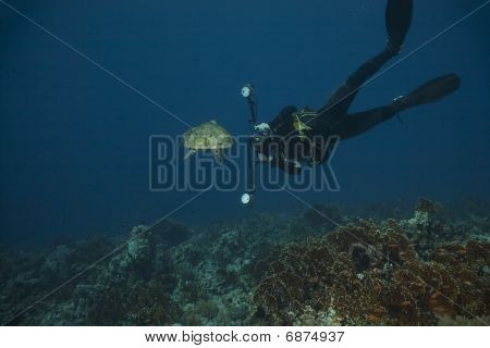 Underwater Photographer And Hawksbill Turtle
