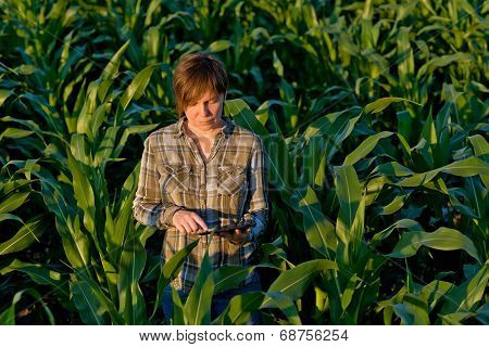 Agronomist With Tablet Computer In Corn Field