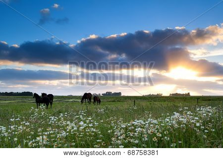 Horses Graze On Pasture At Gold Sunset