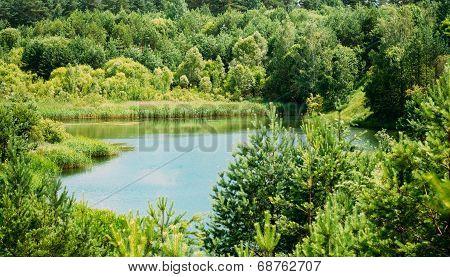 Summer Forest River Lake Pond Bog Landscape