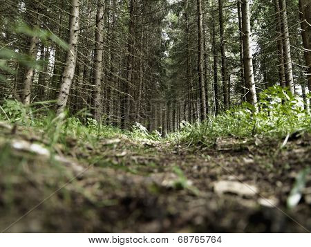 Forest undergrowth