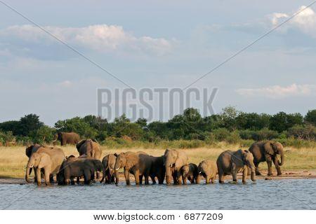 Elefantes africanos, Zimbabwe