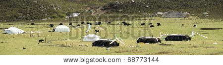 Nomads' Camp Of Amdo
