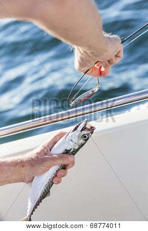 Removing lure from mackerel