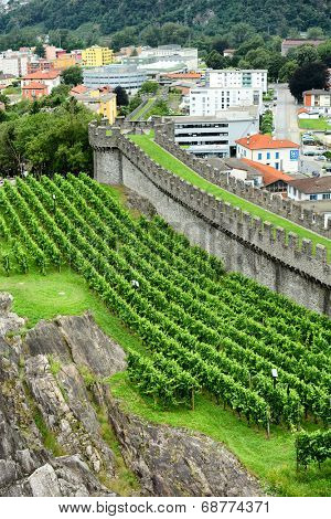 BELLINZONA, SWITZERLAND - JULY 4, 2014: Vineyards at Castelgrande, Bellinzona. Grape vines grow alongside the ramparts of the UNESCO World Heritage Site.