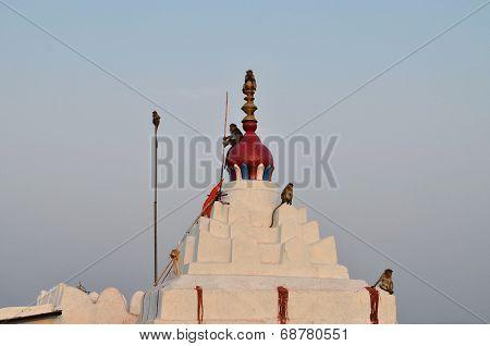 Monkeys in Hanuman Temple, Hampi, Karnataka, India