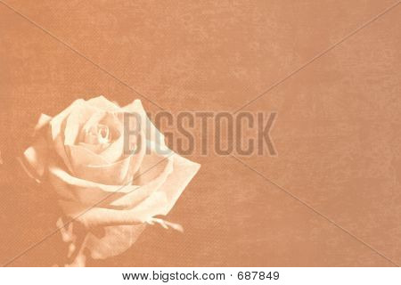 Sepia Rose Stationery