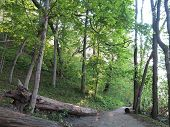 picture of bluff  - Old and New Spring Time Trees Line the Bluff Path at Starved Rock - JPG