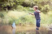 picture of catch fish  - Boy in a pond with a fishing net catching fish in the summer sun concept for childhood - JPG