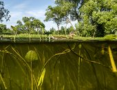 picture of algae  - Duck swims in the Lake  - JPG