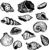 stock photo of scallop-shell  - set of line drawning shells - JPG