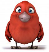 image of red robin  - Red bird - JPG