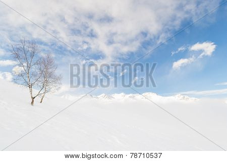 Candid Alpine Environment