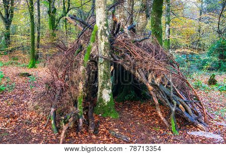 Woodland Survival Shelter