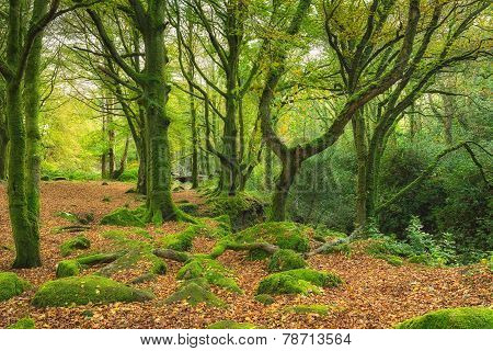 Green Mossy Woods