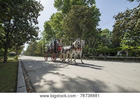 Tourists Riding On Horse Carriage In Seville