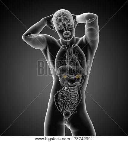 3D Render Medical Illustration Of The Human Adrenal