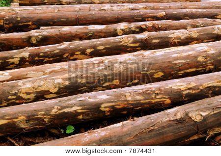 Biomass Material