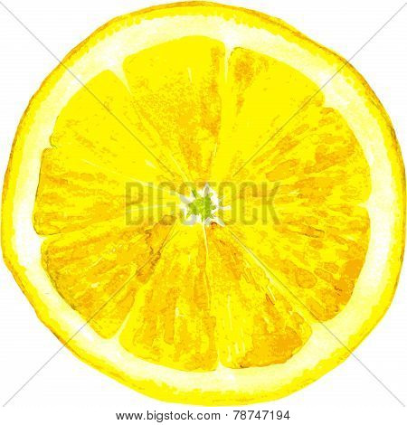 slice of lemon drawing by watercolor