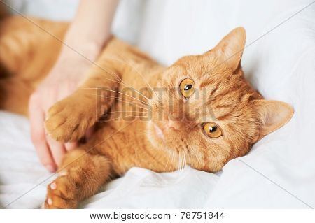 female hand caress cat