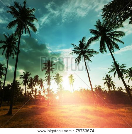 Palm plantation on tropical island