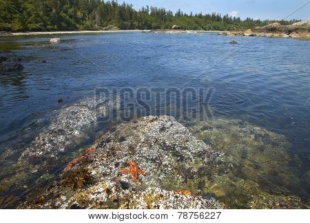 Landscape With Starfish In Cape Scott Park. Vancouver. Canada