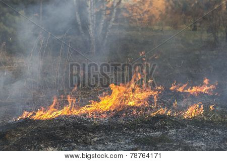Burning Last Year's Leaves And Grass On The Fire