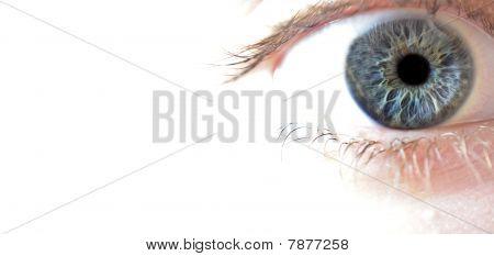 Macro Closeup Of Blue Eye