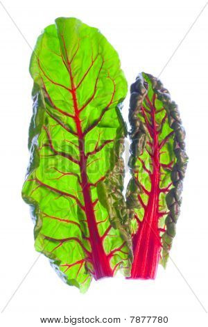 Two Organic Red Spinach Leaves