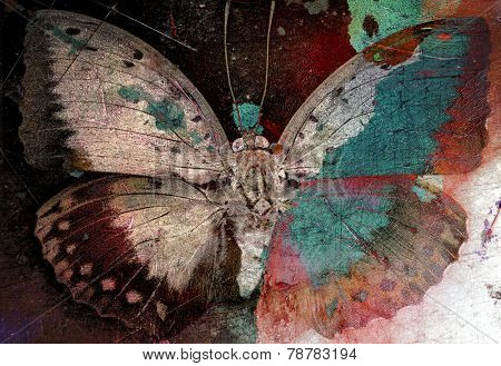 butterfly grunge image