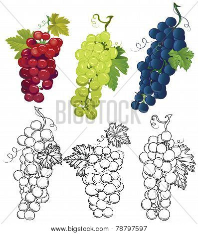 Grapes design vector elements Three contour bunch and three colored bunch, leaves separated